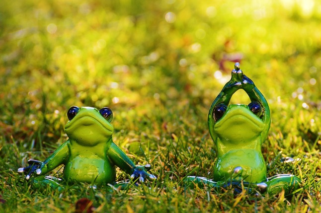 frogs-1109775_1280